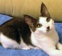 Котёнок Филимон ждёт доброго хозяина