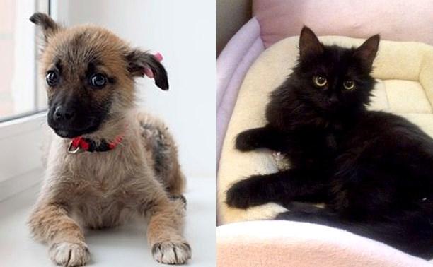 Возьмите себе щенка или котёнка