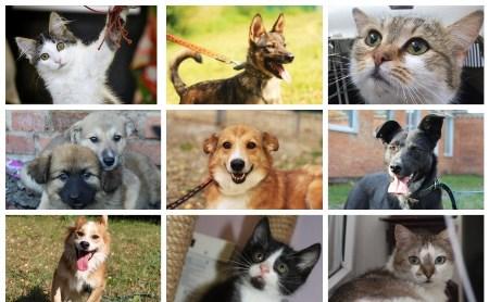 Шесть очаровательных котов и семь собак, которым нужен дом