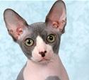 Неземные кошки