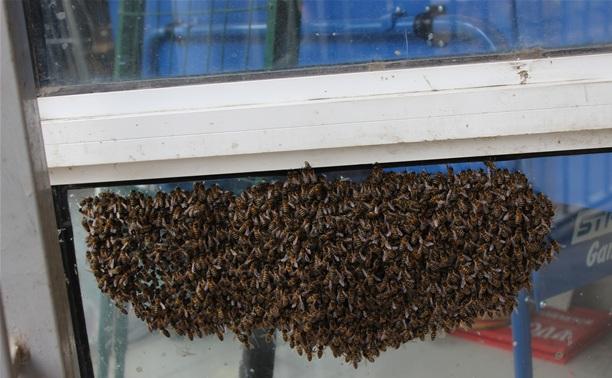 """В офис """"Слободы"""" прилетел рой пчел"""