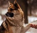 Пропавшая и найденная собаки