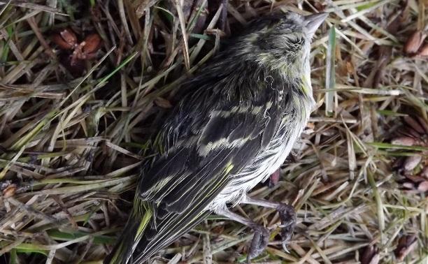 (в нар. жур.)Размышления о птицах и религии...