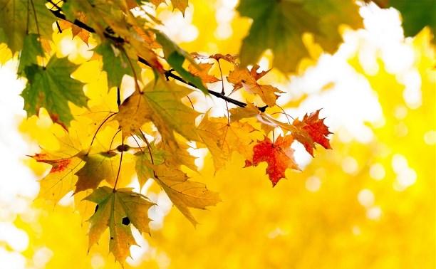 Жёлтыми листьями осени ветер метёт Твой путь