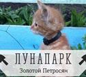 Кот-садовод