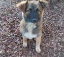 Ищем хозяев для молодой собаки и щенка-подростка