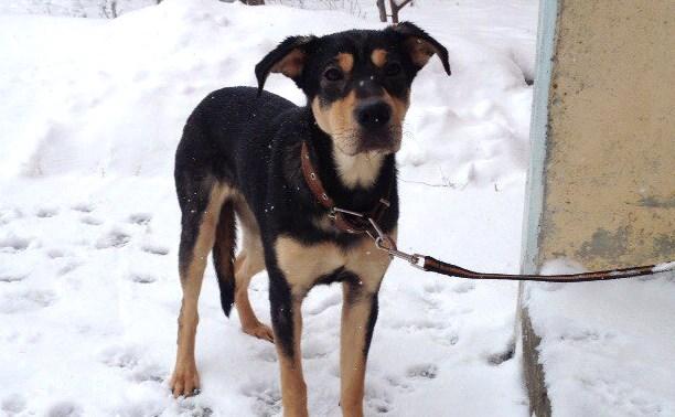 В Платоновском лесу найдена собака, привязанная к дереву
