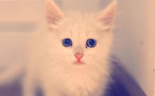 Очаровательные котята ждут хозяев