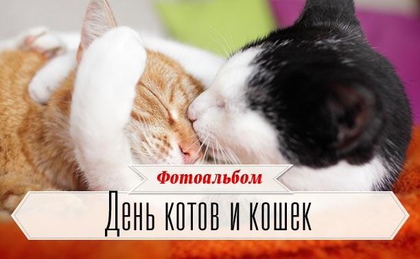 День котов и кошек