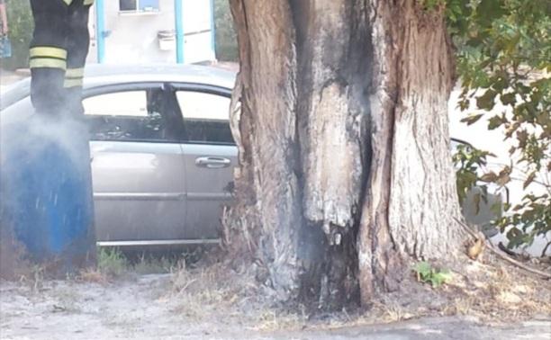 Горящее дерево на Михеева.