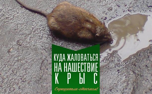 Куда жаловаться на нашествие крыс?