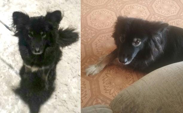 Возле ТРЦ «РИО» украли собаку. Помогите найти!