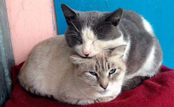 Пёс и кот без лишних хлопот