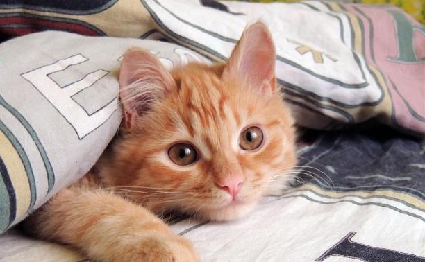 Выбираем понравившиеся кадры в фотоконкурсе «День рыжего кота»