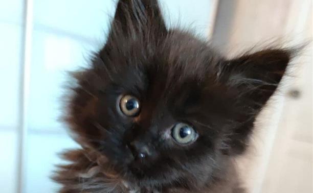 Mysloвчане, помогите придумать имя котейке!