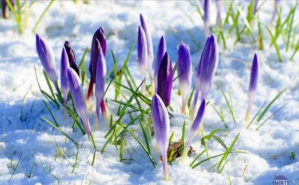 Разгрузка души-3,или Предчувствие весны...