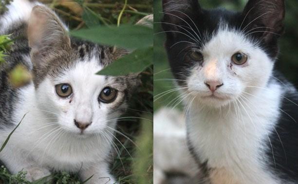 Два котика-подростка очень ждут хозяев