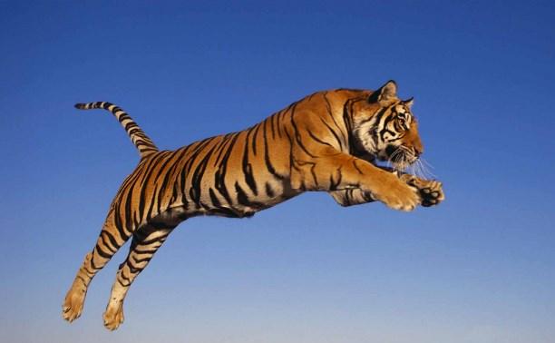 С Днем рождения, Тигра Попрыгун!