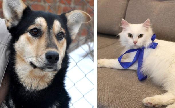«Дворянка» Жуля и ангорская кошка ждут хозяев
