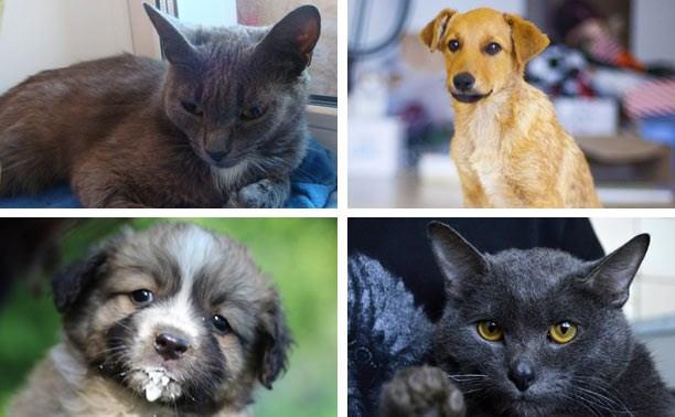 Кошка Мышка, щенок Зая, несчастный кот Алёша и малышня