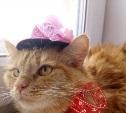 Рыжая красотка Николь ждёт хозяев