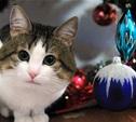 Пёс и кот в Новый год