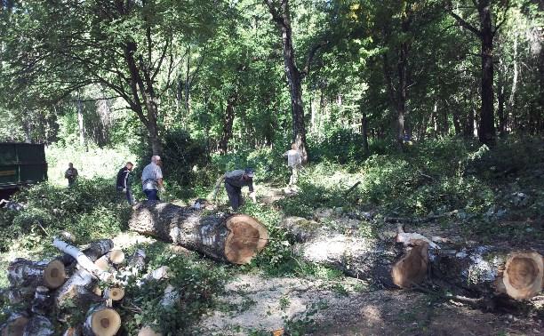 «Благоустройство» по-тульски: Вырубка деревьев в парке