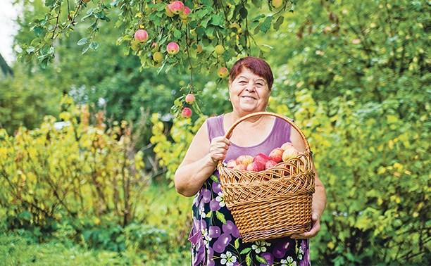 Яблочко от яблоньки