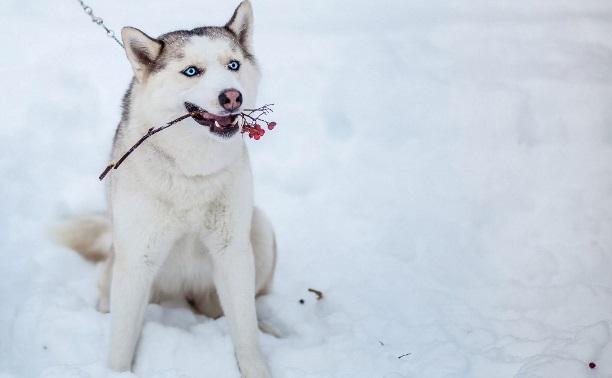 Пироплазмоз: Как защитить свою собаку?