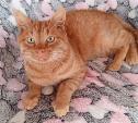 Тихон – для любителей крупных рыжих котов
