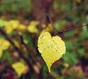 Осень - это шквал эмоций!