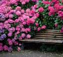 Сад для аллергика