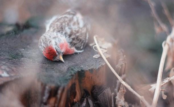 Цена жизни. О том, как волонтеры спасают птиц на Благовещение