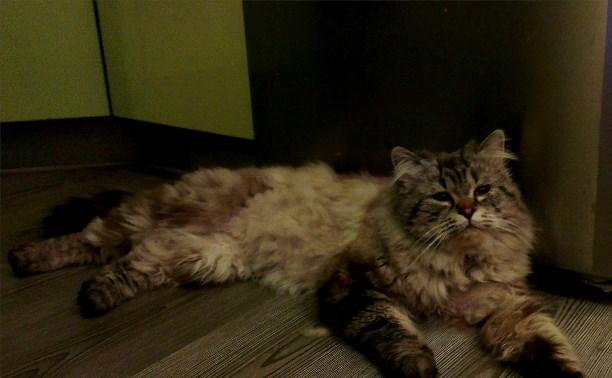 В районе Московского вокзала пропал кот