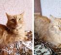 Рыжие кот и кошка ждут свой тёплый дом и любви