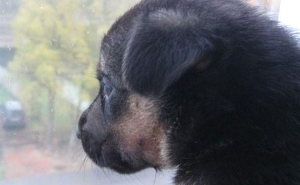 Пять щенков спасены от смерти и ищут семью