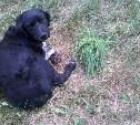 Найден пёс! Ищем хозяев