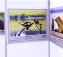 В Москве открылась выставка National Geographic. Среди участников есть и туляки.