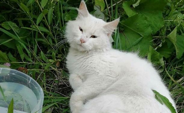 Помогите найти хозяина кошки