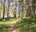 Приглашаю в лес.. Карта прилагается))