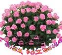 С днем рождения, Nebeska !!!