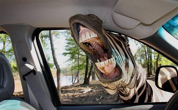 Про подлую зебру и кофе с блохами
