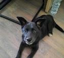 «Ищет маму или убежал, плачет!»: в районе Щегловской засеки найден щенок