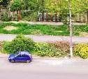 Зачем вырубают здоровые деревья на улице Хворостухина?