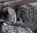 """Спасибо """"Грицовскому Коммунальщику"""" за спасенного кота!"""