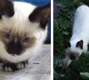 Пропал кот Василёк. Нашедшему - вознаграждение!