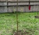 "Акция ""Посади свое дерево""!!!"