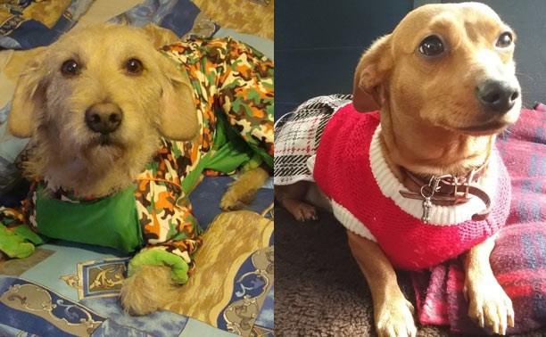 Читатели портала выбрали самых модных собак