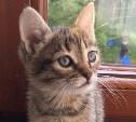 Юная кошечка ждёт хозяев