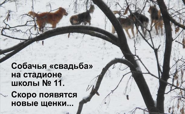 Щёкино – царство собак и мышей